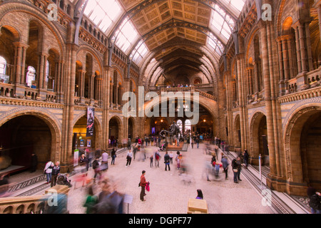 Main Hall of the Natural History Museum London - Stock Photo