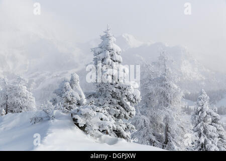 Snow covered trees, Nassfeld, Hermagor, Carinthia, Austria - Stock Photo