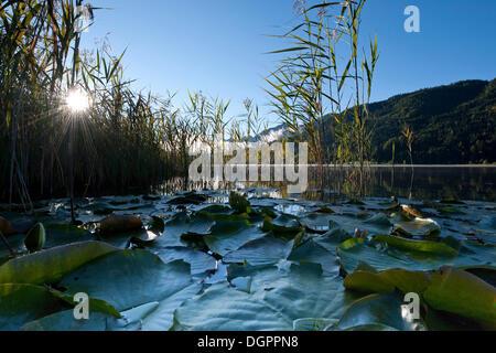 Early morning mood at Weissensee Lake, Carinthia, Austria, Europe - Stock Photo