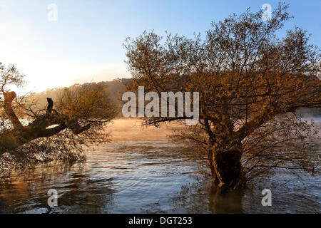 Early morning on the Rhine river in autumn, trees, Rheinfelden - Baden, Baden-Wuerttemberg - Stock Photo