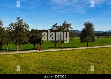 Cyclist at Schalkham, Trumer Lakes Route, Salzburg Lake District, Salzburg State, Austria, Europe - Stock Photo