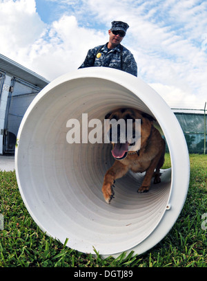 A US Navy sailor directs his military working Dog Hopski through an obedience training course October 22, 2013 at - Stock Photo