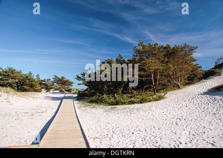 Jetty and white sandy beach on the south coast of Dueodde, Bornholm, Denmark - Stock Photo