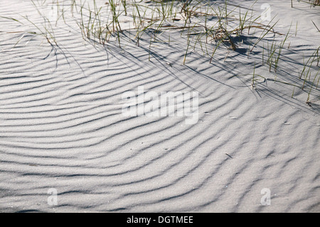White sandy beach on the south coast of Dueodde, Bornholm, Denmark - Stock Photo