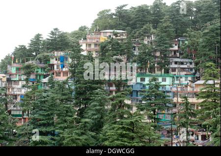Houses and trees, cedar trees, Upper Dharamsala, McLeod Ganj, Himachal Pradesh, Himalayas, India, South Asia, Asia - Stock Photo