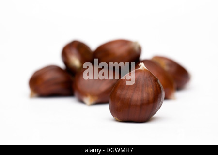 Castanea sativa. Sweet Chestnuts isolated on a white background. - Stock Photo
