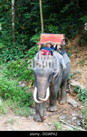 Elephant safari, Thai man asleep, Mahout, sleeping on the head of an elephant, Win Elephant Riding, beim Kao Sok - Stock Photo