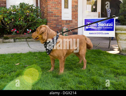 Albertson, New York, U.S. 26th October 2013. Molly Malone, a golden retriever mix dog, is with her family outside - Stock Photo