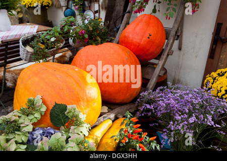 Autumnal pumpkins, harvest decoration in the restaurant - Stock Photo