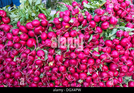 radishes in a farmers market - Stock Photo