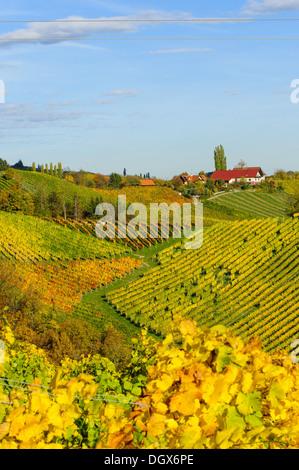 Suedsteirische Weinstrasse, Southern Styria wine route in autumn, Austria, Styria, Southern Styria, Glanz - Stock Photo