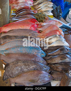 Fresh fish on the Maputo fish market - Stock Photo