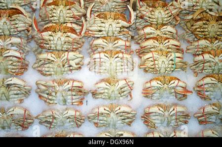 Live crabs on the market in Seattle, Seattle, Washington, United States - Stock Photo