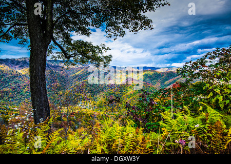 Autumn in the Smoky Mountains National Park. - Stock Photo