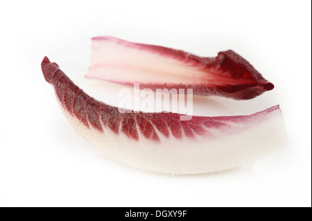 chicory leaves on white background - Stock Photo