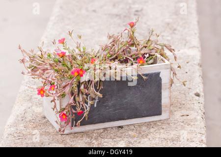 small chalkboard copyspace in decorative flower pot outdoor summer cafe