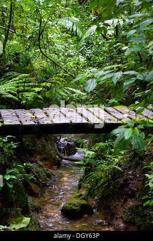 Wooden bridge covered with moss and leaves, one of the trails at the Santa Elena Biological Reserve - Stock Photo