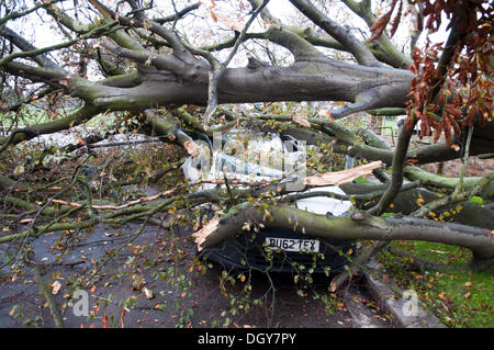 Chiswick, London, UK. 28th Oct, 2013. Two vehicles crushed by a fallen tree in Chiswick, blocking Bolton Road just - Stock Photo
