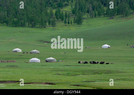 Mongolian summer camp of nomads with herds of yak, Mongolian round tents, ger or yurt in lush green grasslands near - Stock Photo