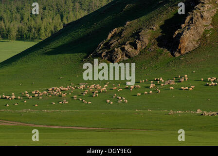 Flock of sheep in the grasslands at the Orkhon waterfall in front of the mountains of the Khuisiin Naiman Nuur Nature - Stock Photo