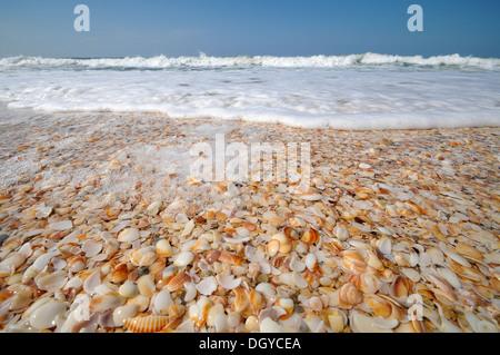 Sea shells on a seashore - Stock Photo