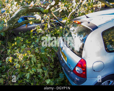 Nightingale Lane, Clapham, London, UK  . 28th Oct, 2013. Part of a tree falls on a Jaguar saloon car as a result - Stock Photo