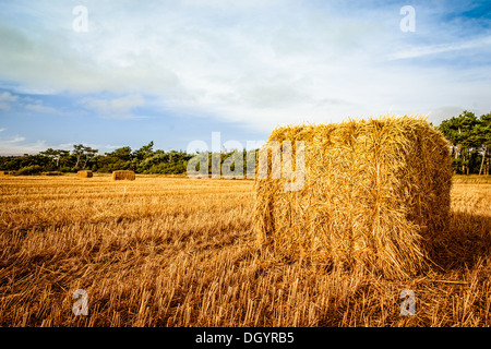 Straw bale on the field in sunshine - Stock Photo