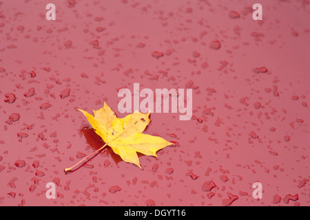 red paint on car with maple leaf and raindrops - Stock Photo