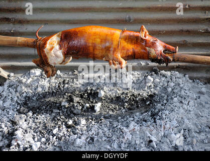 Suckling pig being roasted on a spit, Cebu, Philippines, Southeast Asia, Asia - Stock Photo