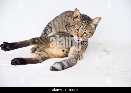 cat cleaning itself for hygiene - Stock Photo