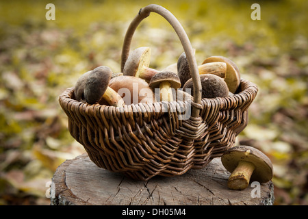 Small basket with autumn mushrooms - Stock Photo