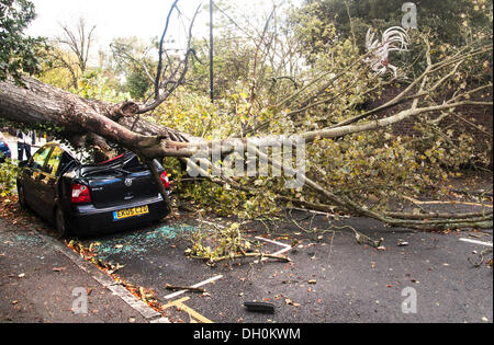 London, UK. 28th Oct, 2013. A tree uprooted by gale force winds on Monday morning, crushes a Volkswagen Polo in - Stock Photo