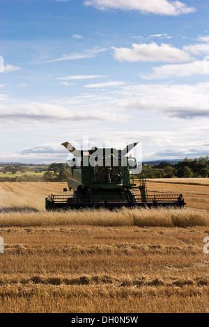 A John Deere combine harvests wheat, late afternoon on Northumberland, England, UK - Stock Photo