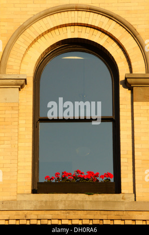 Geraniums on a windowsill of an old bank building in theFairhaven historic district, city of Bellingham, Washington - Stock Photo