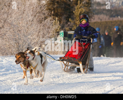 Running sled dogs, Alaskan Huskies, dog team, child, young boy, musher, dog sled race near Whitehorse, Yukon Territory, - Stock Photo