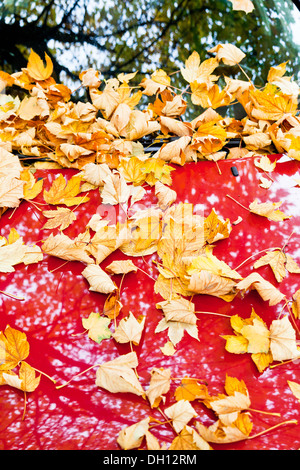 yellow autumn leaves on red car hood - Stock Photo