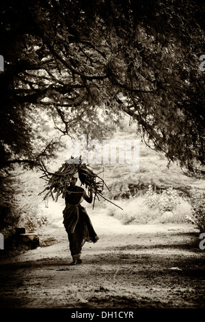 Rural Indian village woman carrying cut firewood on her head in the Indian countryside. Andhra Pradesh, India. Sepia - Stock Photo