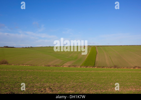 A farmland background landscape with blue skies over rolling green fields of young cereal crops on the Yorkshire - Stock Photo