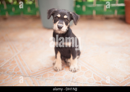 An adorable little puppy poses for the camera in his car, on the patio and on the couch. - Stock Photo