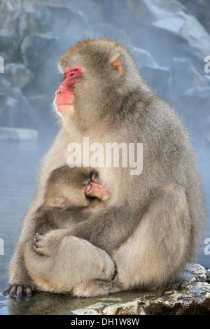 Japanese macaque (Macaca fuscata) mother holding her baby sitting beside a hot spring, Jigokudani, Japan - Stock Photo