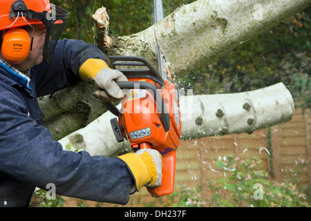 Godalming, Surrey, UK. 28th October 2013. A lumberjack uses a chainsaw to clear a fallen silver birch tree in a - Stock Photo