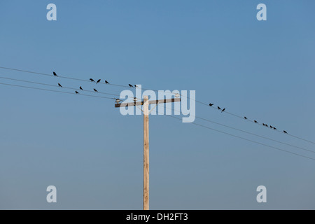Birds on telephone wire - Stock Photo