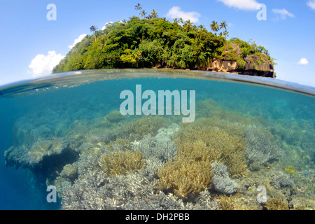 Soft Coral Reef, Sinularia sp., Nukuatea Motu, Polynesia, Wallis and Futuna Islands - Stock Photo
