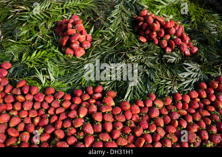 Strawberries sold on the street Haridwar Uttarakhand India Asia - Stock Photo
