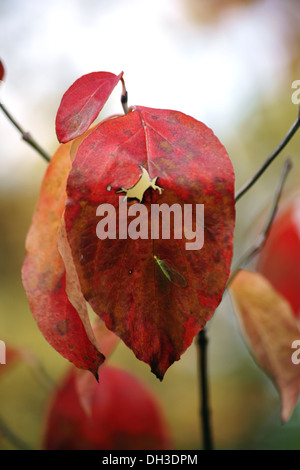 Autumn leaf and green lacewing - Stock Photo