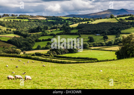 A stormy, showery summer's day in the Brecon Beacons National Park, Wales with Pen y Fan and Corn Du in the distance. - Stock Photo