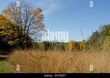 Close-up of tall, brown grass in a field with trees in the distance. - Stock Photo