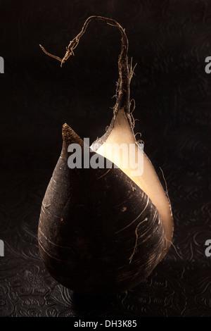 Black Winter Radish (Raphanus sativus var. niger) - Stock Photo