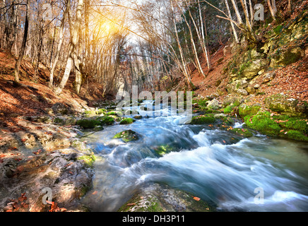 Fast river in a mountain forest on a sunny day - Stock Photo