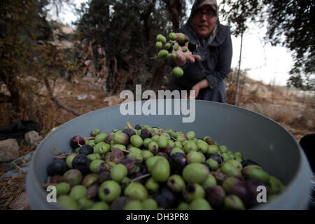 Jerusalem, Israel. 30th Oct, 2013. Palestinian olive pickers in the neighborhood of the Mount of Olives in East - Stock Photo